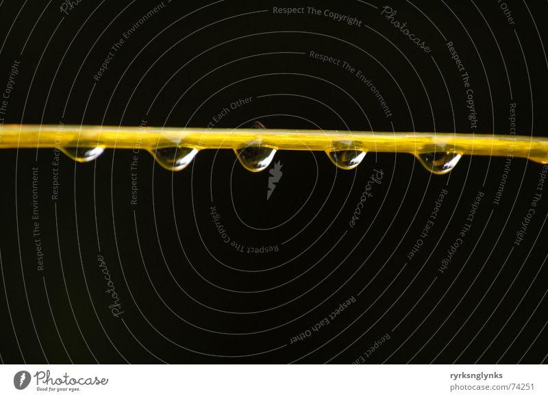 tropfen #2 Wasser Baum gelb Herbst Regen Wassertropfen Seil mehrere Schnur 5 Gesellschaft (Soziologie) Tau Zusammenhalt Wäscheleine