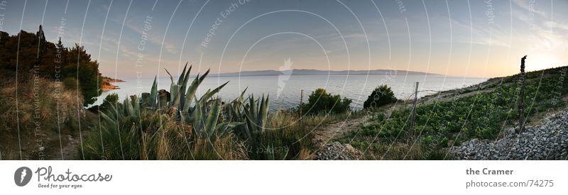 Panorama_Brac Panorama (Aussicht) Meer Kroatien Sonnenuntergang Agave Horizont Küste Stimmung schön Wasser Europa brac Wein Mittelmeer Himmel Insel Abend ruhig