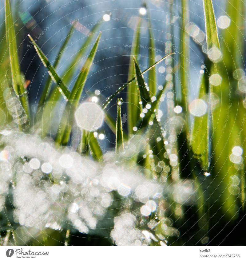 Mikrokosmos Umwelt Natur Pflanze Wassertropfen Klima Wetter Schönes Wetter Gras Blatt Wildpflanze Halm glänzend leuchten außergewöhnlich fantastisch frisch hell