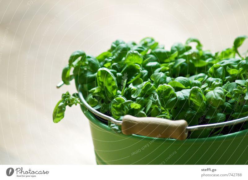 mein Kräutergarten Kräuter & Gewürze Ernährung Bioprodukte Pflanze Nutzpflanze Duft Essen dehydrieren Wachstum frisch natürlich grün Basilikum Basilikumblatt