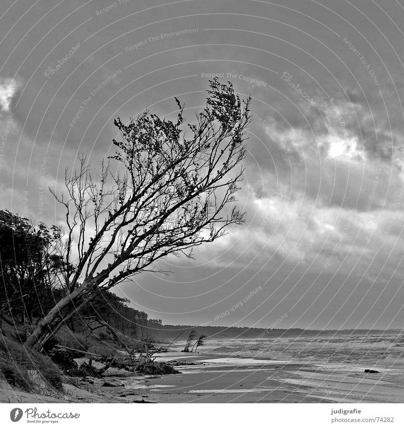 Sturm am Weststrand See Baum Strand Meer Küste Wellen Brandung Gischt Wolken Wald salzig Einsamkeit grau schwarz bedrohlich Fischland-Darß-Zingst Ostsee Wasser