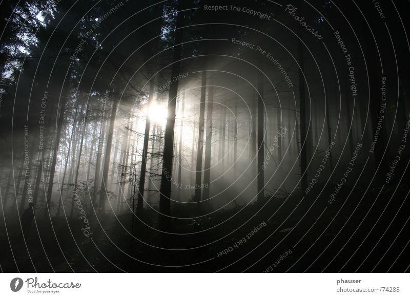 Morgenstimmung Sonnenaufgang Nebel Herbst Wald dunkel Sonnenstrahlen Morgendämmerung biken