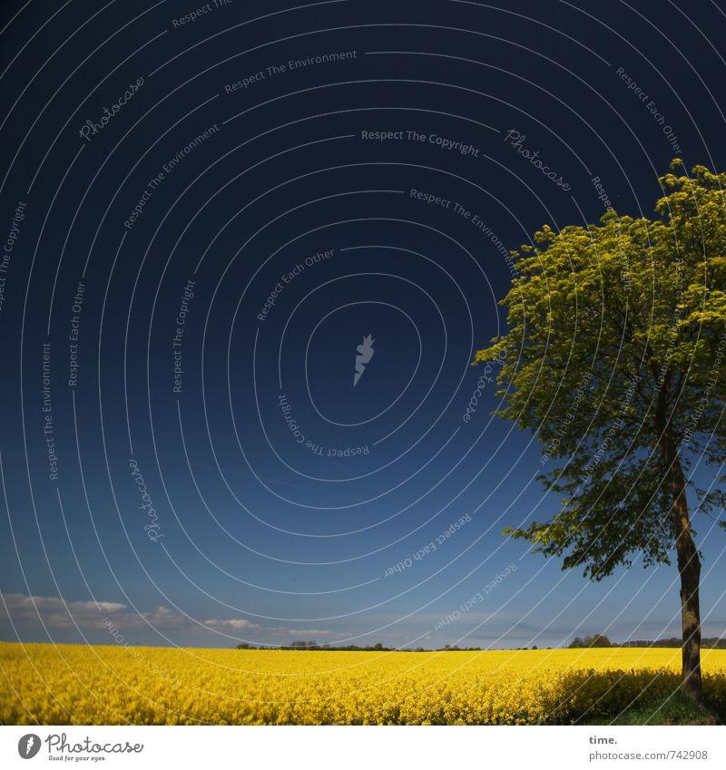Azzurro Himmel Natur schön Pflanze Baum Landschaft Ferne Umwelt Frühling Zeit Stimmung Feld elegant ästhetisch Schönes Wetter Lebensfreude