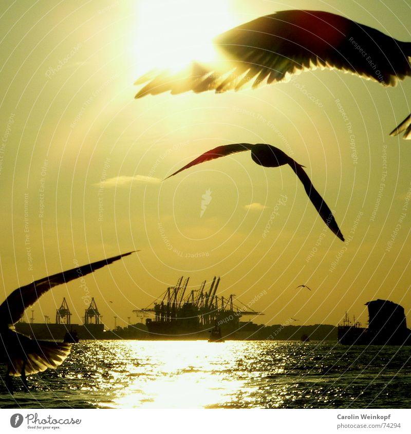 An den Landungsbrücken raus... Vogel Sonnenuntergang Kran Möwe Sehnsucht Wolken gelb grün schwarz weiß Licht frei Wasserfahrzeug Wellen Abenddämmerung Optimist