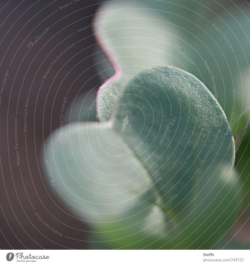 Radieschen wachsen im Gemüsegarten Jungpflanze Wurzelgemüse Gartengemüse gedeihen einheimisch Vorfreude Nutzgarten frisch April Frühlingsgarten Bioprodukte