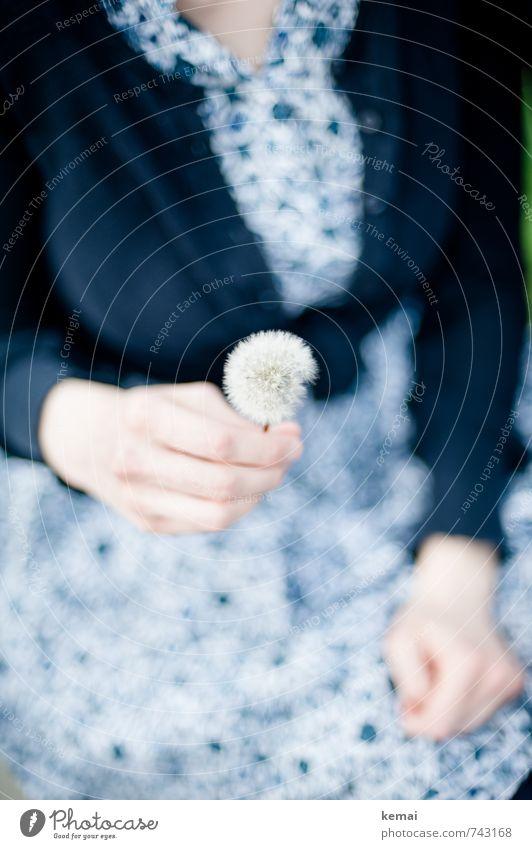 Ready to be gepusted Lifestyle Stil Mensch feminin Frau Erwachsene Arme Hand Finger 1 Blume Löwenzahn Kleid Weste festhalten schön blau weiß Glück