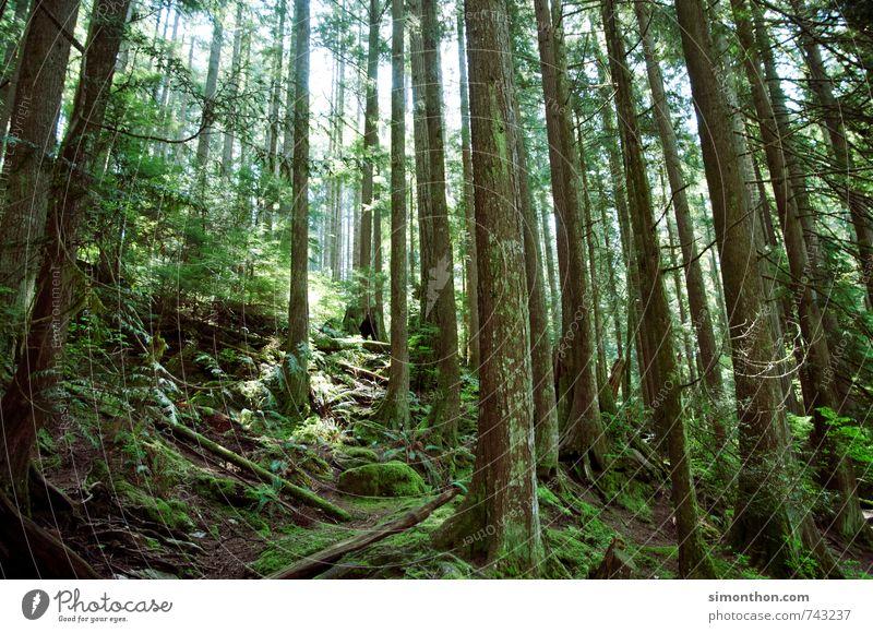 Wald Umwelt Natur Landschaft Pflanze Klima Klimawandel Baum Moos Efeu Farn Urwald Duft verirrt Kanada grün Freiheit Ferien & Urlaub & Reisen Kohlendioxid