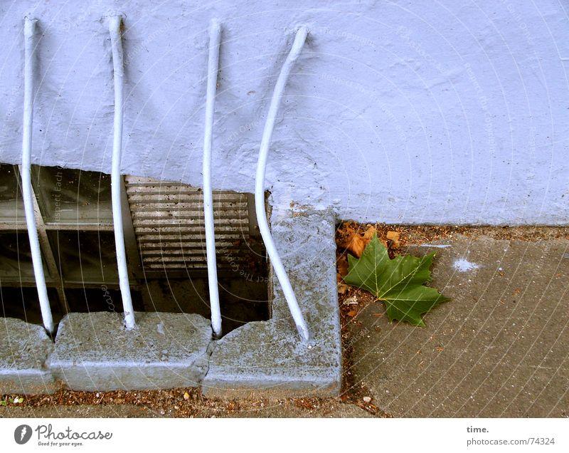 Stilleben mit Beule Gedeckte Farben Außenaufnahme Keller Herbst Blatt Mauer Wand blau Gitter Hinterhof Eisen Geländer Treppenabsatz ungefegt blue iron autumn