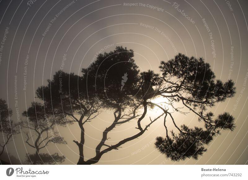 *400* kleine Lichtblicke Ferien & Urlaub & Reisen Himmel Wolken Sonnenlicht Sommer Baum Wald Mallorca braun schwarz Beginn Stimmung Morgen Neuanfang