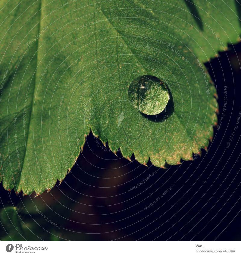 o² Natur Pflanze Wassertropfen Blatt Garten frisch klein nass grün Farbfoto Gedeckte Farben Außenaufnahme Nahaufnahme Makroaufnahme Menschenleer Tag