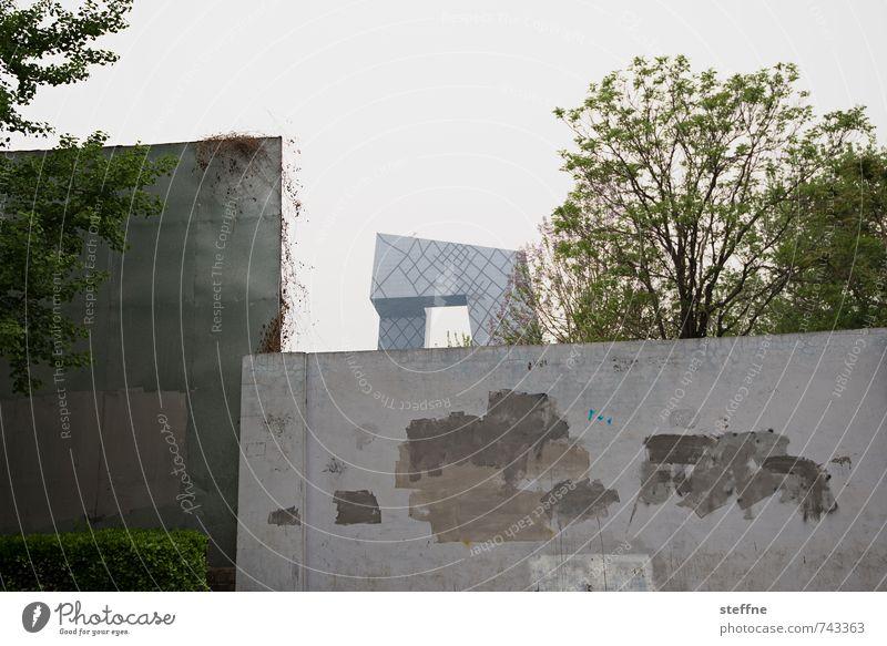 Growing City Baum Peking China Hauptstadt Stadtzentrum Skyline Hochhaus Mauer Wand Wachstum Farbfoto Gedeckte Farben Außenaufnahme Textfreiraum oben