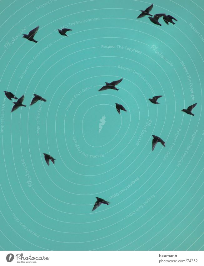 Herbstvögel II Himmel grün Freiheit Tanzen Vogel fliegen