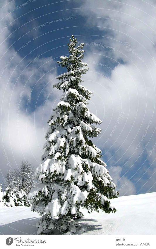 Solitaire Tanne Baum Winter Schnee Berge u. Gebirge einzeln