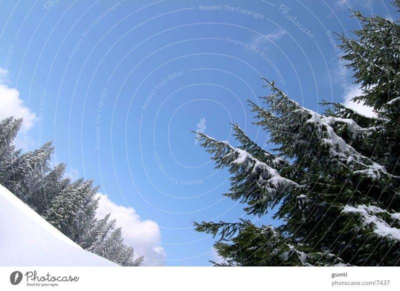 Winterpanorama Österreich Tanne Wald Baum Berge u. Gebirge Schnee Skipiste
