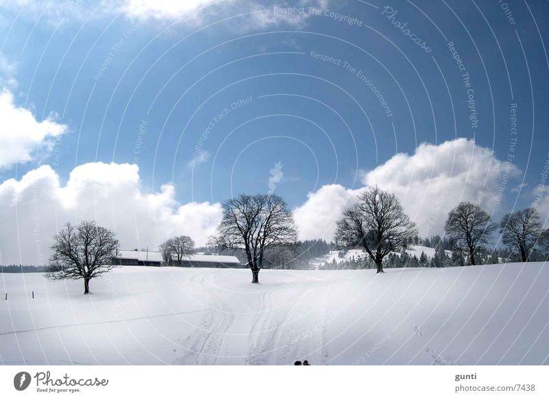 Alee im Schnee Winter Baum Berge u. Gebirge Skipiste Hütte Sonne