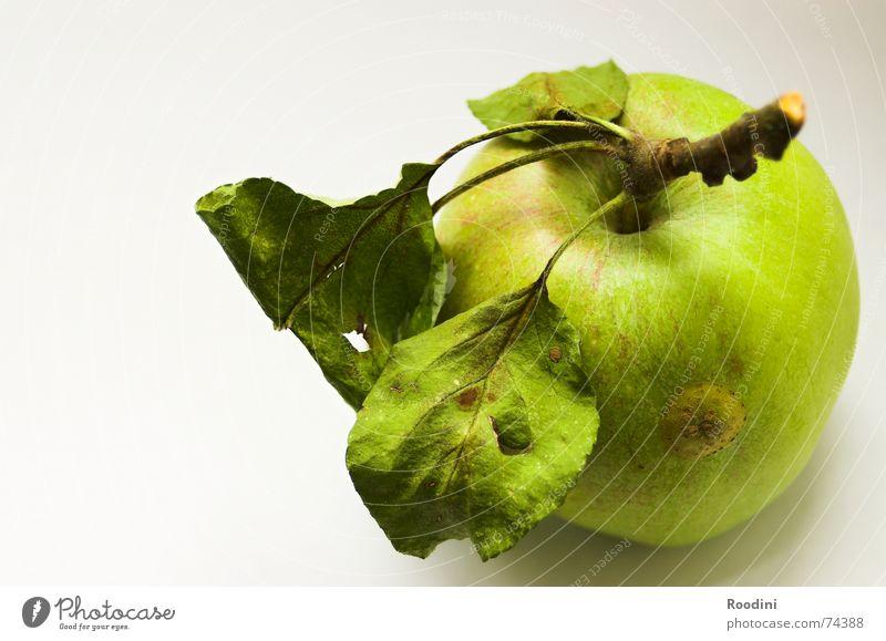 Der Apfel ansich Natur grün Baum Blatt Gesundheit Frucht natürlich Lebensmittel authentisch Ernährung genießen Stengel Ernte lecker reif
