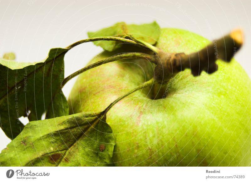 Vogelperspektive Natur grün Baum Blatt Gesundheit Frucht natürlich Lebensmittel authentisch Ernährung Apfel genießen Stengel Ernte lecker reif