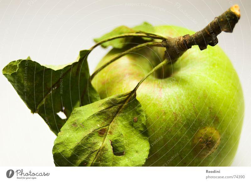 Zahnpflege unplugged Natur grün Baum Blatt Gesundheit Frucht natürlich Lebensmittel authentisch Ernährung Apfel genießen Stengel Ernte lecker reif
