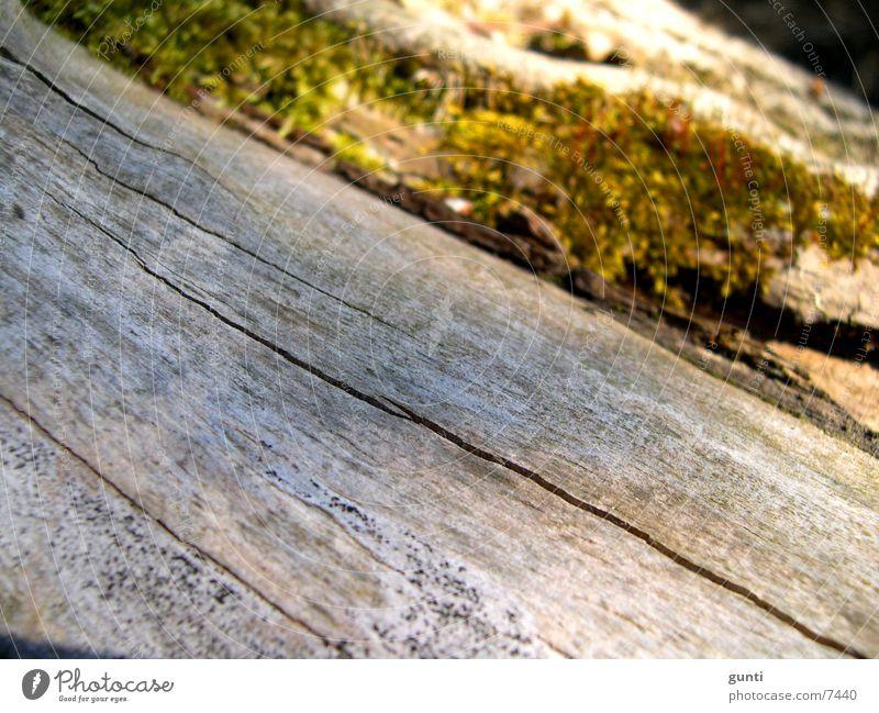 Toter Baumstamm mit Moos grün Tod grau Stengel