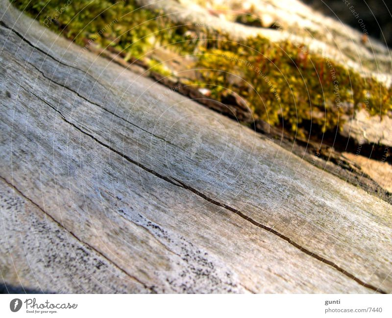 Toter Baumstamm mit Moos Baum grün Tod grau Stengel Baumstamm