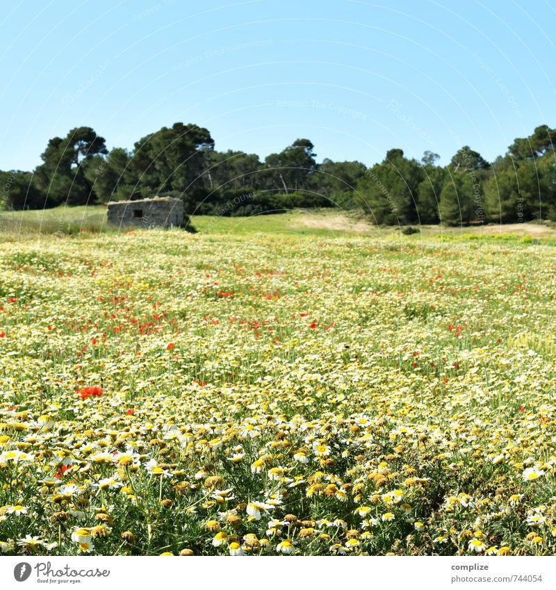 Blumenwiese ruhig Duft Ferien & Urlaub & Reisen Tourismus Wolkenloser Himmel Sonne Pflanze Baum Gras Sträucher Garten Park Wiese Horizont Idylle Margerite