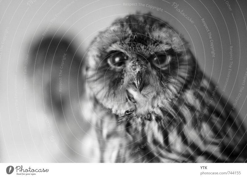 You-who? Himmel (Jenseits) Tier dunkel Leben natürlich Tod außergewöhnlich Wildtier Flügel Spitze Ewigkeit Unendlichkeit Fell Wachsamkeit tierisch Tiergesicht