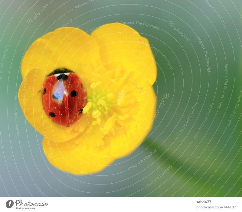 Geborgen Natur grün Pflanze Sommer Einsamkeit Erholung rot Blume ruhig Tier gelb Wiese Frühling Blüte klein Glück