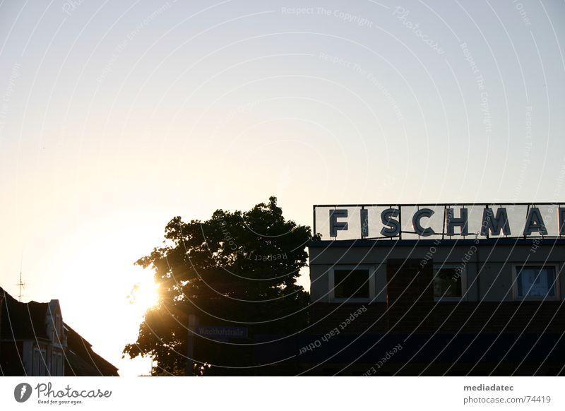 Fischma am Abend Himmel Sonne Sommer ruhig Schönes Wetter Markt Schleswig-Holstein Kiel friedlich Fischmarkt