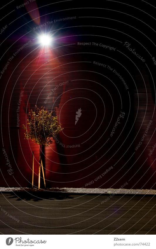 erleuchtung Baum Licht Wand Erkenntnis rot Muster Blech Teer links Lampe Laterne dunkel Nacht grün tree light Schatten Abend bläter Stein