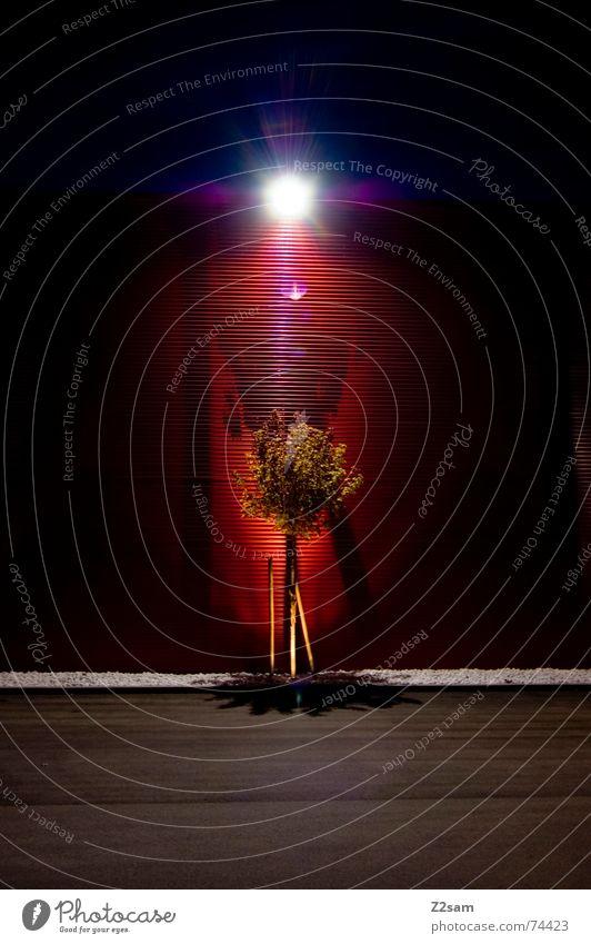 erleuchtung II Baum grün rot Lampe dunkel Wand Stein Laterne links Blech Teer Erkenntnis