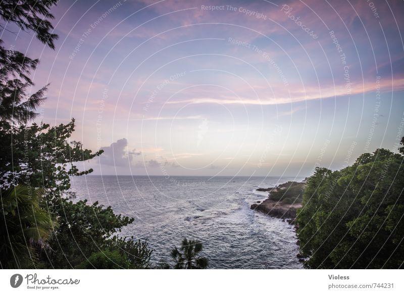 Paradies Himmel Natur Ferien & Urlaub & Reisen schön Pflanze Sommer Sonne Meer Erholung Landschaft Wolken Ferne Küste träumen Wellen Schönes Wetter