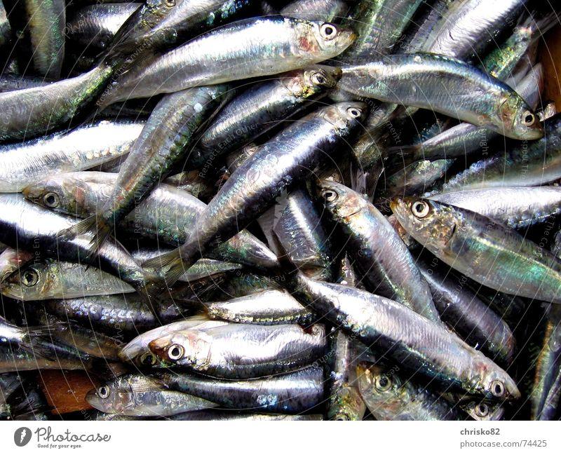 1 Pfund Sardinen Meer Tod Fisch stehen Geruch Markt Scheune Übelriechend