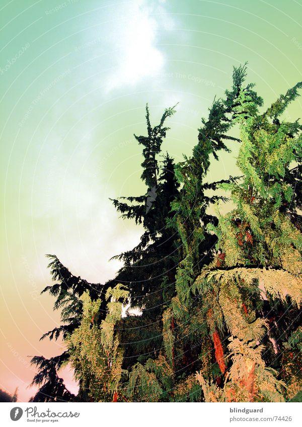 Agent Orange Baum grün vergiftet orange Himmel aufwärts hoch tree down up oben Garten Chemie unwirtlich pestizid