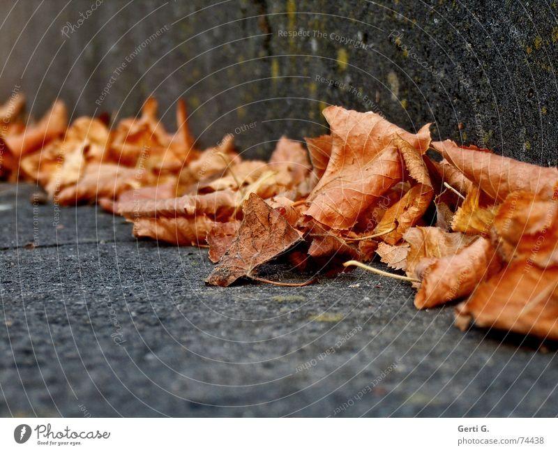 push Blatt Winter kalt Wärme Herbst Stein Zusammensein orange Treppe Ecke Vergänglichkeit Jahreszeiten trocken Stengel Herbstlaub herbstlich