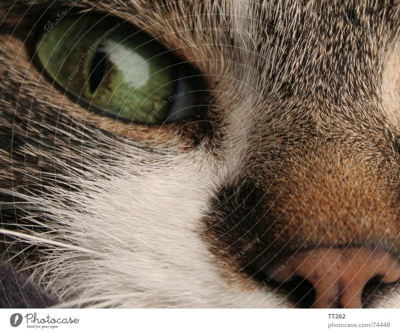 """Kater - """"Catcher"""" Katze Fell nah Katzenauge Haare & Frisuren Auge katzennase Hauskatze Vertrauen"""