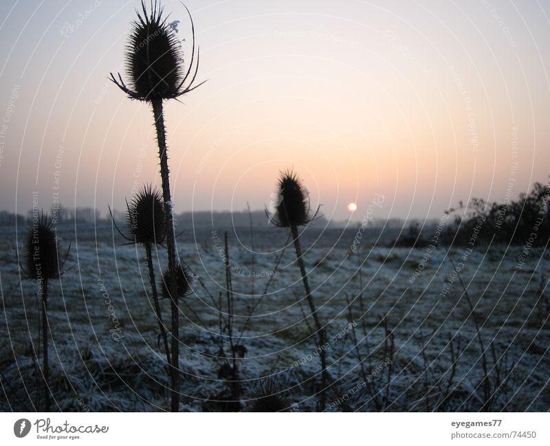 Winterset Sonnenuntergang Distel kalt Eis Frost Abend spatziergang