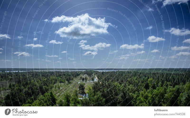 Bauernmoor Umwelt Natur Landschaft Pflanze Himmel Wolken Sommer Schönes Wetter Baum Sträucher Feld Wald Moor Sumpf grün Farbfoto Außenaufnahme Luftaufnahme Tag