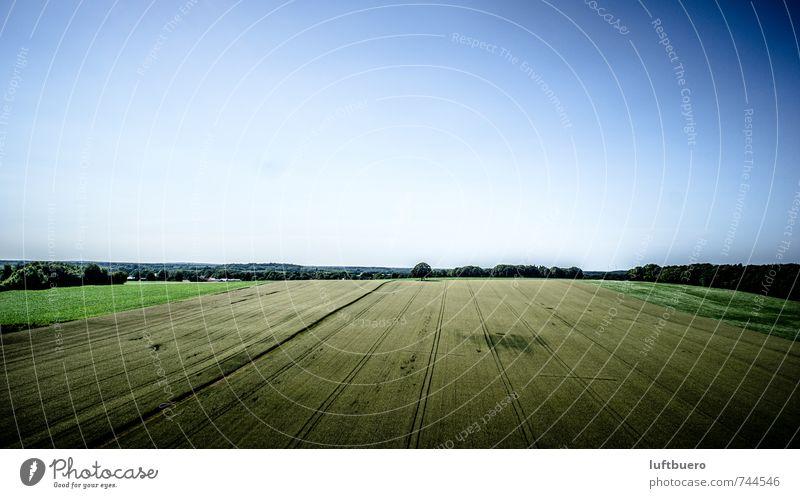 Eiche im Feld Natur Landschaft Pflanze Himmel Wolkenloser Himmel Sommer Baum Nutzpflanze blau Landwirtschaft Ackerbau Farbfoto Außenaufnahme Luftaufnahme Tag