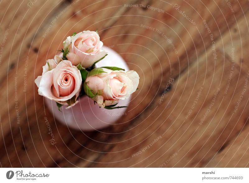 zum Muttertag Natur Pflanze schön Blume Freude Liebe Gefühle Glück klein Stimmung Zusammensein Freundschaft Geschenk Romantik Rose Duft