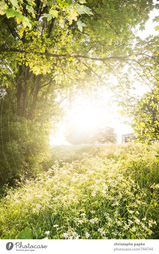 Lightleak Umwelt Natur Pflanze Sonne Sonnenlicht Frühling Sommer Schönes Wetter Baum Blume Gras Blatt Grünpflanze Park Blühend hell Wärme Frühlingsgefühle
