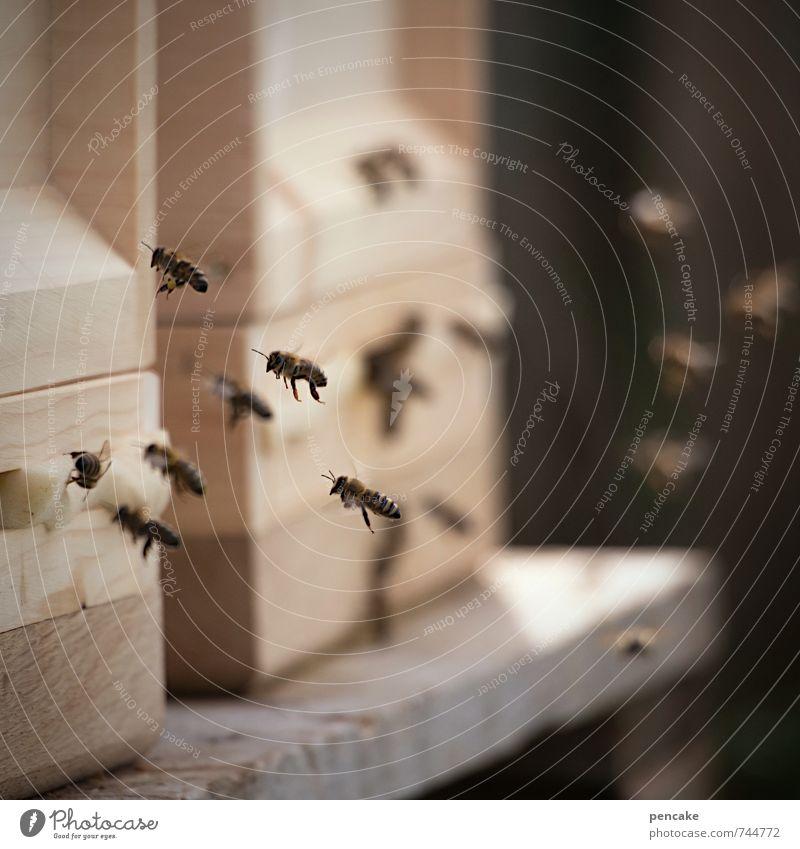 bienenfleissig Umwelt Natur Tier Biene Schwarm Zeichen fliegen Erfolg Gesundheit Zusammensein stachelig stark Wärme feminin wild Bewegung geheimnisvoll