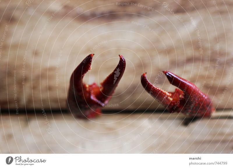 verklemmt Tier Umwelt Gefühle bedrohlich Holzbrett Schere Krebs Zange Krabbe eingeengt befangen zwicken Flußkrebs
