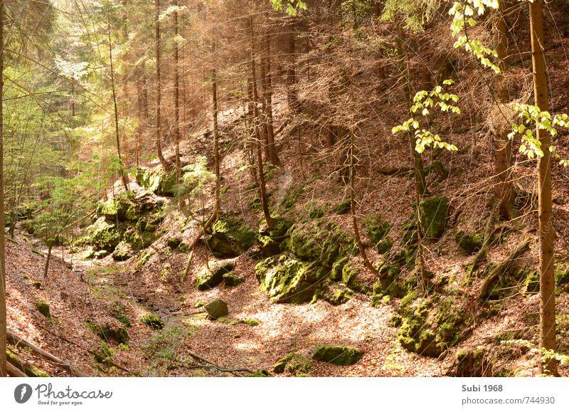 Wald,Träume,Frühling Natur grün Baum Landschaft Holz Stein braun Felsen Schönes Wetter