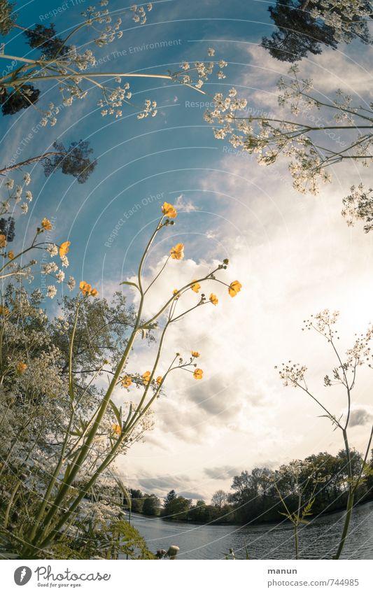 Blumenmuster Gesundheit Allergie Wohlgefühl Umwelt Natur Landschaft Himmel Wolken Frühling Sommer Schönes Wetter Pflanze Baum Gras Sträucher Wildpflanze