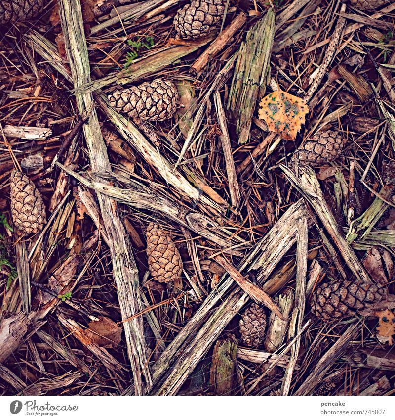 trockenheit | brennwert Natur Winter Wald Wärme Herbst Holz braun orange Erde Urelemente Zeichen brennen ansammeln Waldboden anzünden