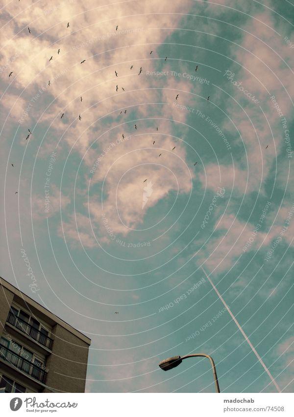 MÖVEN + HAUS + LATERNE + KONDENZSTREIFEN + WOLKEN + HIMMEL Himmel Stadt blau Wolken Tier Haus Fenster Leben Architektur Gebäude Freiheit fliegen Vogel oben
