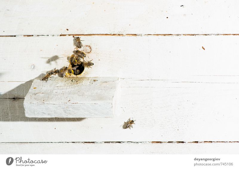 Natur blau Sommer Tier Umwelt natürlich Arbeit & Erwerbstätigkeit Aktion Insekt Biene heimwärts Mitarbeiter Schwarm Biologie Mensch Bienenstock