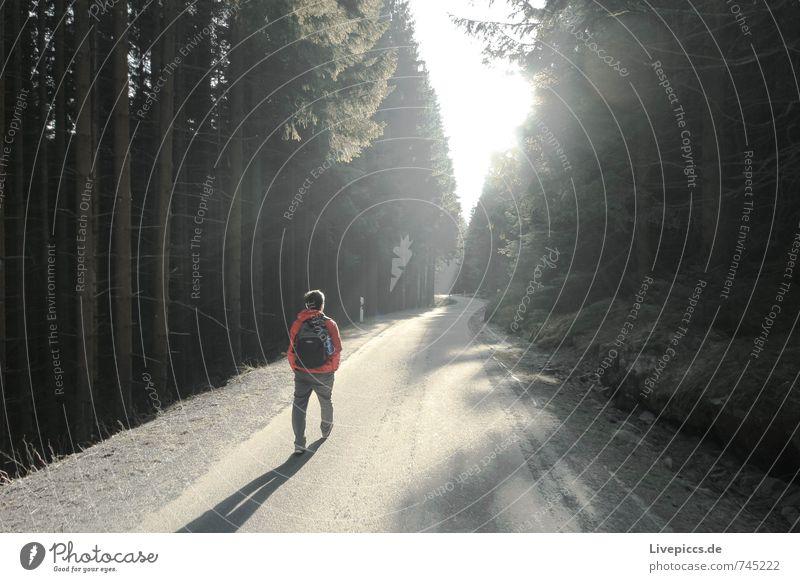 walking Mensch maskulin Mann Erwachsene 1 18-30 Jahre Jugendliche Umwelt Natur Landschaft Pflanze Himmel Wolken Sonne Sonnenlicht Frühling Klima Schönes Wetter