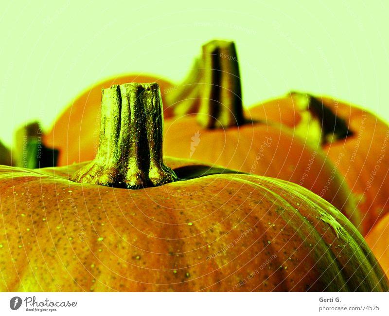 cut Streifen Gemüse Stengel dick Ernte Trennung Fett hart Halloween Kürbis Brustwarze Vegetarische Ernährung Haarschnitt Erntedankfest Knolle Kürbiszeit