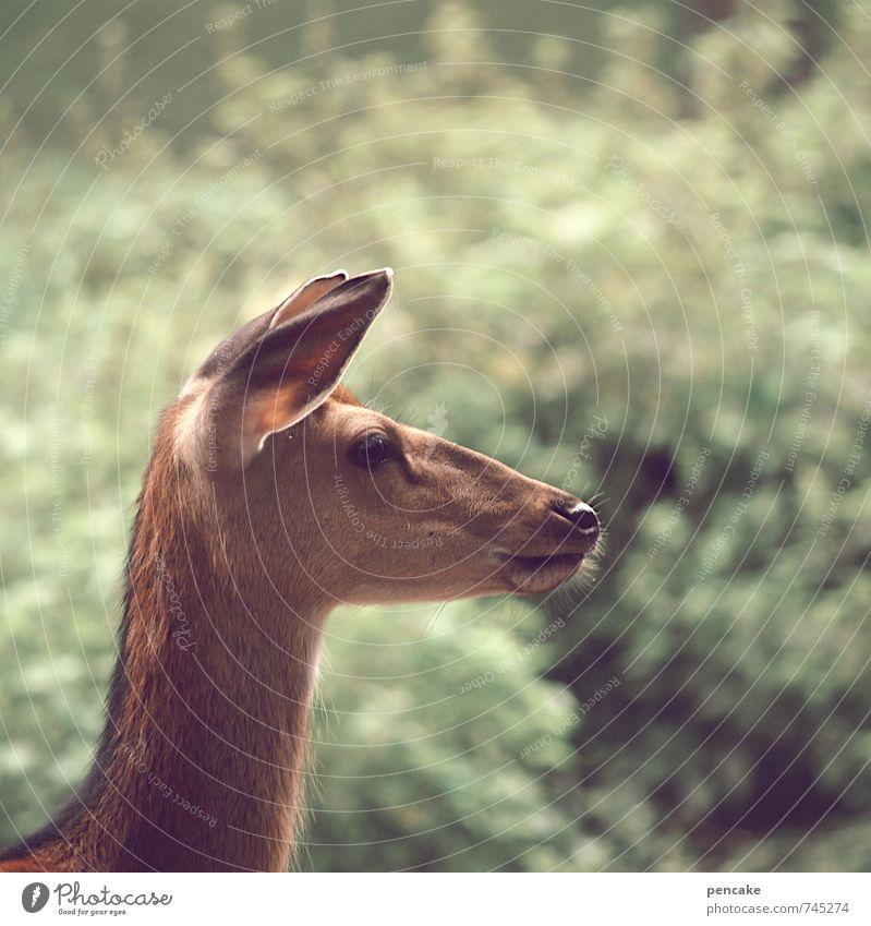 RehVision Natur Frühling Sommer Sträucher Tier Wildtier 1 Zeichen beobachten Blick ästhetisch Wärme feminin weich Frieden Idee unschuldig Zukunft Ohr rein